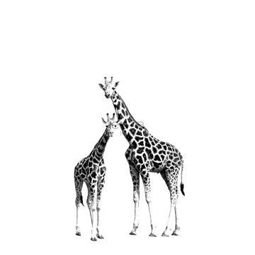 fototapet giraffer svart och vitt