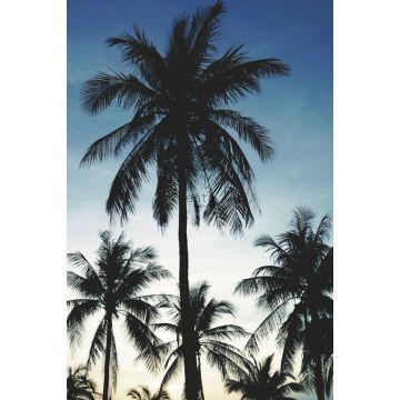 fototapet palmer blått, svart och beige