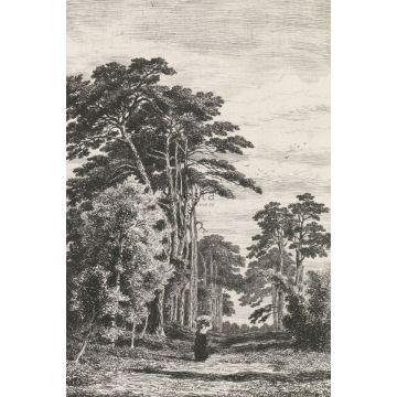 fototapet trälandskap svart och vitt