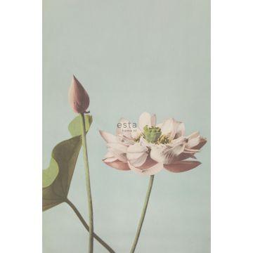 fototapet lotusblomma antikrosa