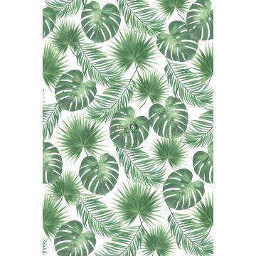 fototapet tropiska blad grönt