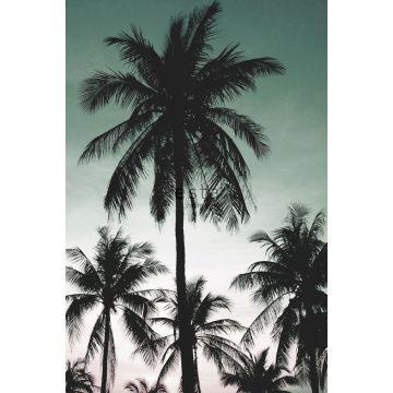 fototapet palmer bensingrönt