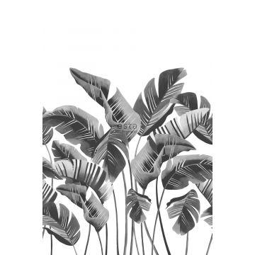 fototapet stora bananblad svart och vitt