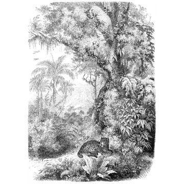 fototapet djungel svart och vitt