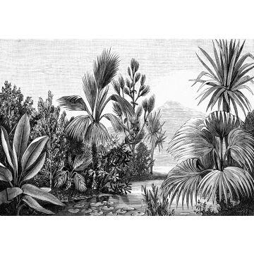 fototapet tropiskt landskap svart och vitt
