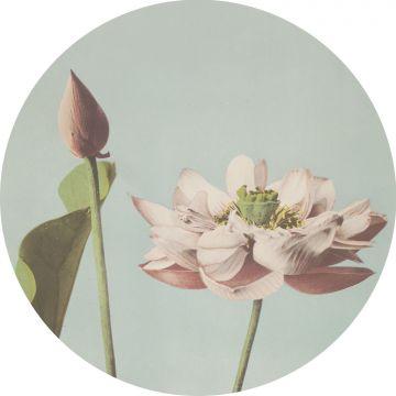 självhäftande rund tapet lotusblomma milt rosa och vintage gråblått
