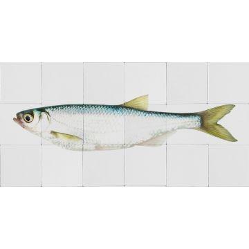 wallsticker fisk gul och blått